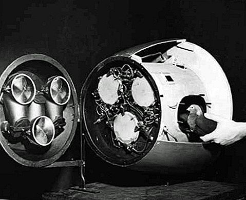WWII-bestanden: Pigeon-Guided Missiles en Bat Bombs