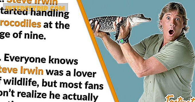 41 Wild Facts om Steve Irwin.