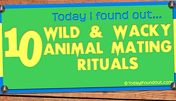 10 Wild and Wacky Animal Matused Rituaalid