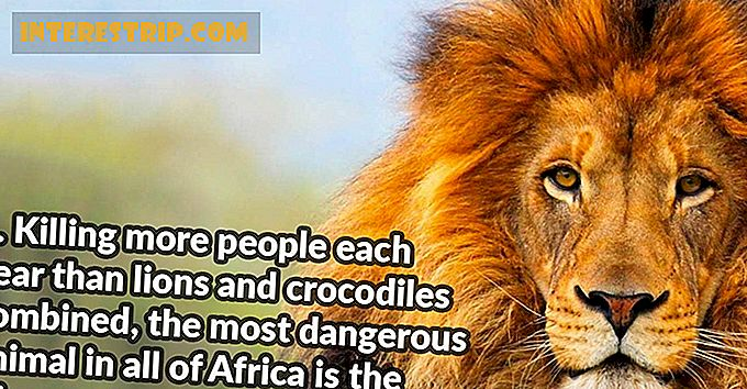 32 Little Known Facts About Africa