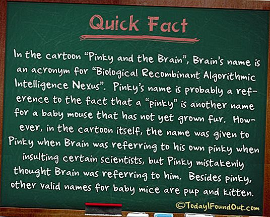 "In Pinky and the Brain is Brain's Name een acroniem voor ""Biological Recombinant Algorithmic Intelligence Nexus"""